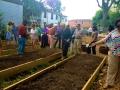 romney planting